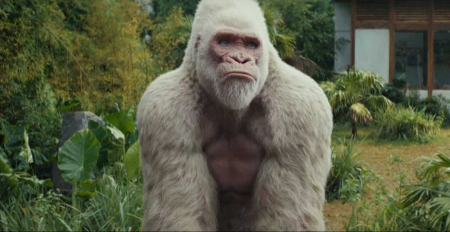 George the albino gorilla in the Rampage movie.