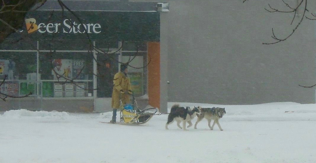 Canadian hero takes dog sled to the Beer Store during April snow storm