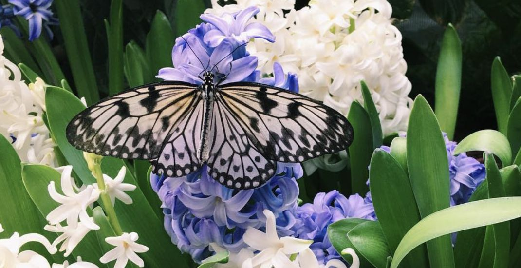 Only a few days left to check out Montreal's magical butterfly exhibit