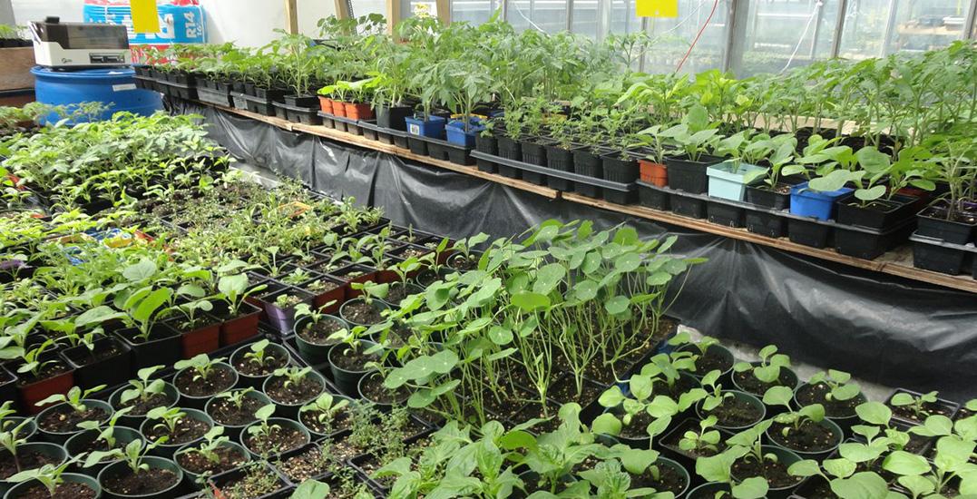 Concordia greenhouse cover