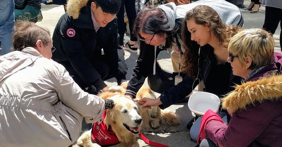 Therapy dogs visit those affected by Toronto van attack (PHOTOS)