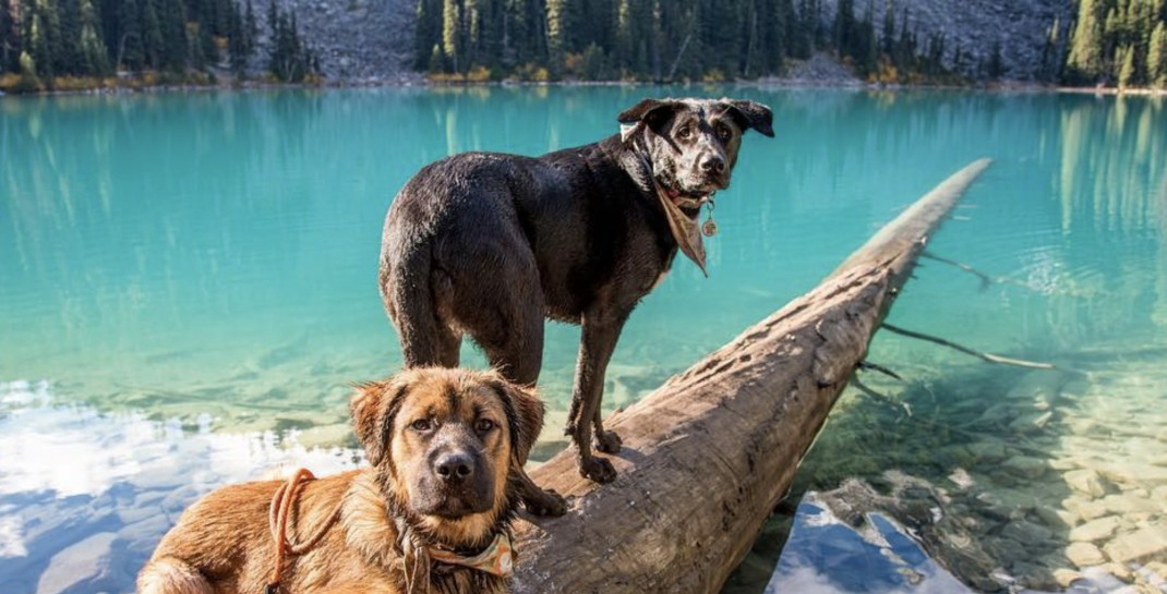 Hikers no longer allowed to bring dogs to Joffre Lakes Provincial Park