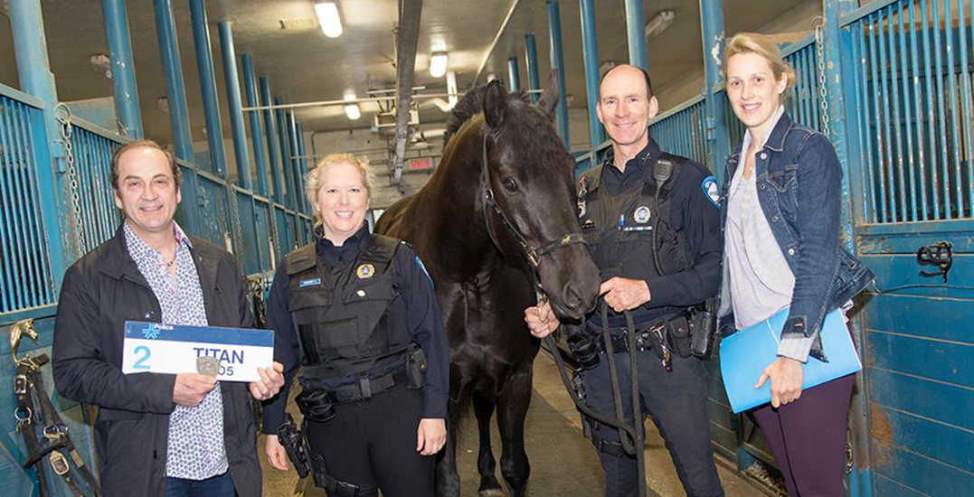 The Montreal Police are selling one of their retired horses