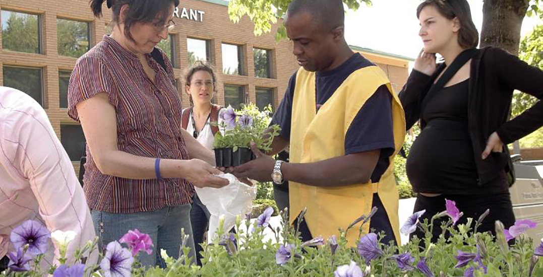Residents of these boroughs can get free flowers this month