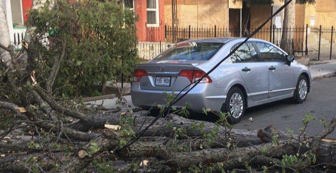 Toronto wind storm causes power outages, delays, and closures (PHOTOS)