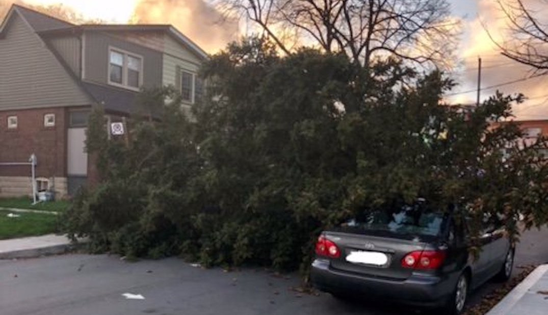 Toronto Hydro still in 'an emergency state' after Friday's wind storm