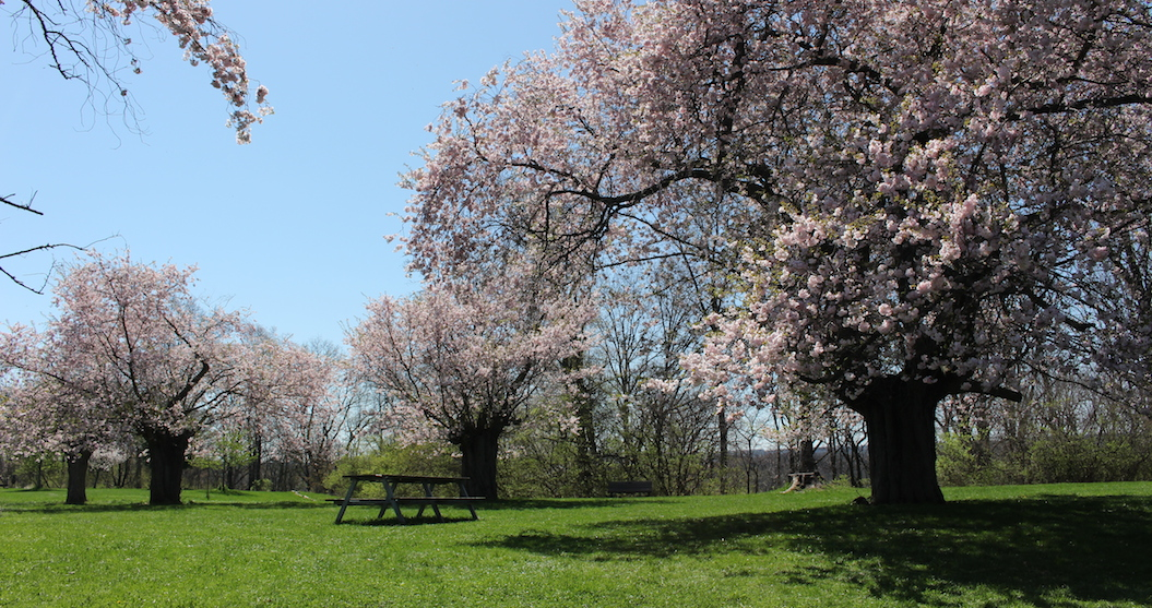 This garden less than an hour from Toronto is full of cherry blossoms (PHOTOS)
