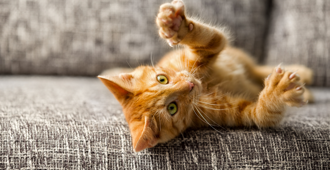 Cat declawing officially banned in BC
