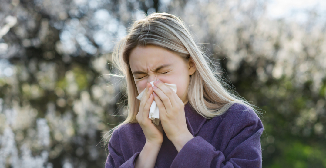 Alberta's allergy season increased by almost 100 days since 2006