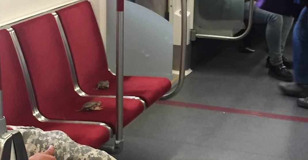 Live crabs spotted riding the TTC this week
