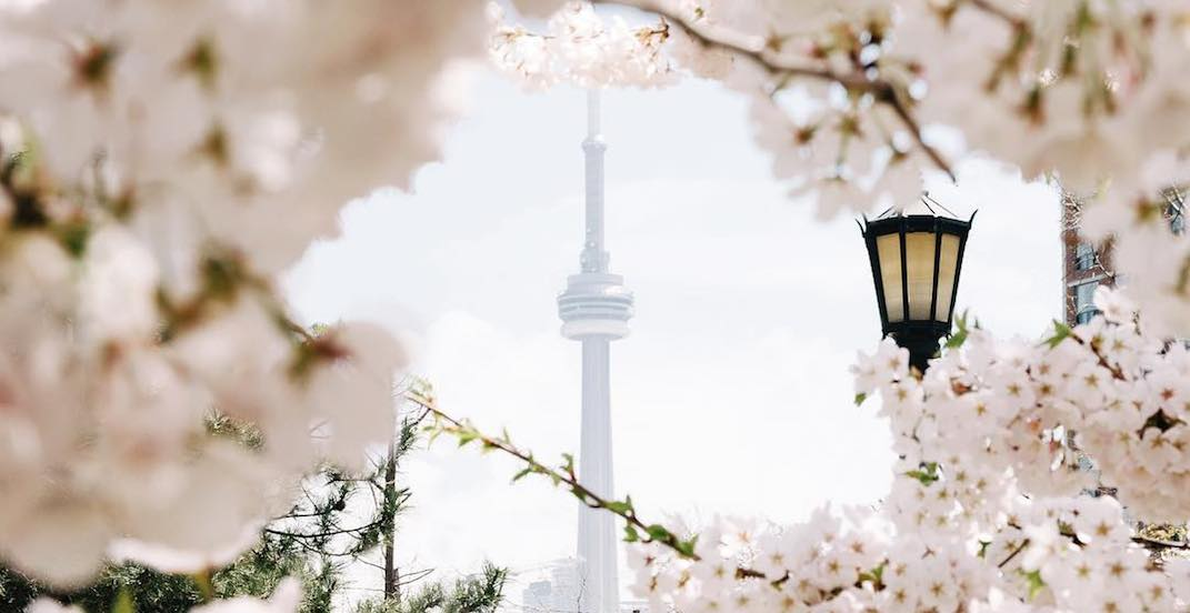 5 things to do in Toronto today: Tuesday, May 15