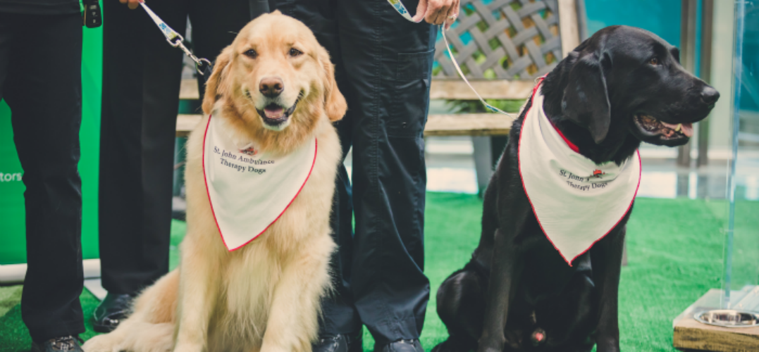 This puppy therapy program is another way YVR helps make travel stress-free