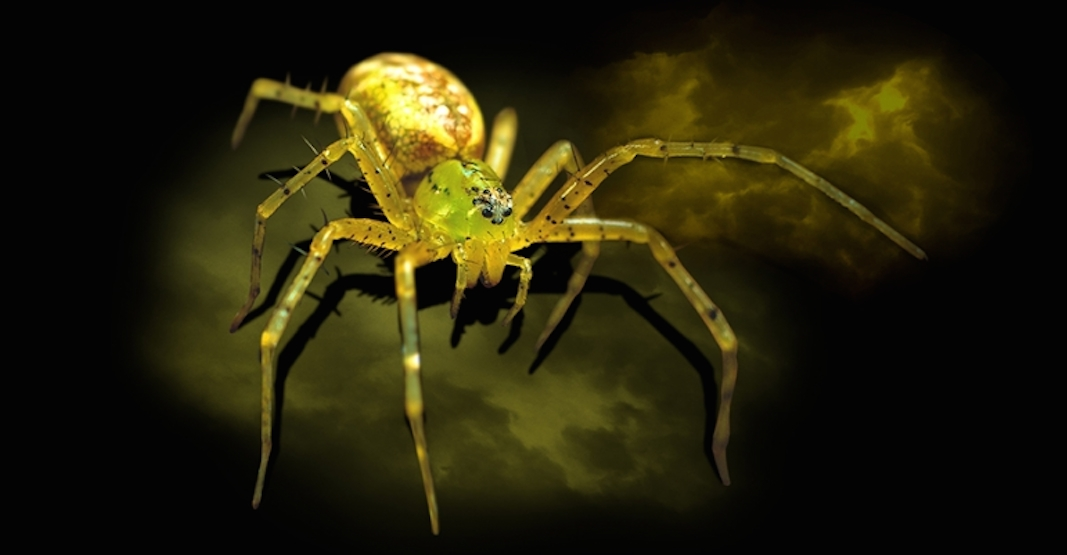 A new exhibit dedicated exclusively to spiders is coming to the ROM next month