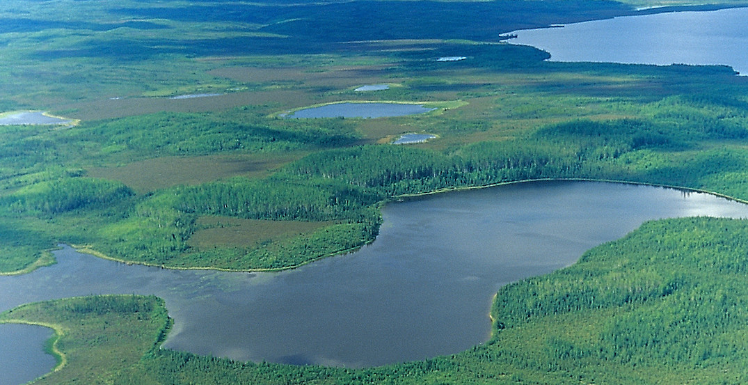 The world's largest protected boreal forest has been created in Canada