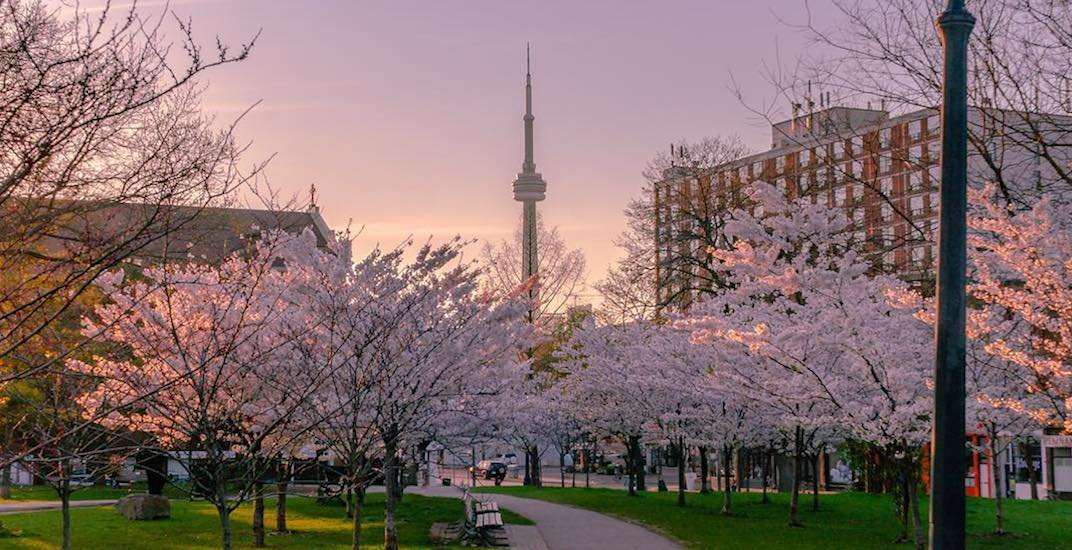 19 bucket list worthy things to enjoy in Toronto this spring