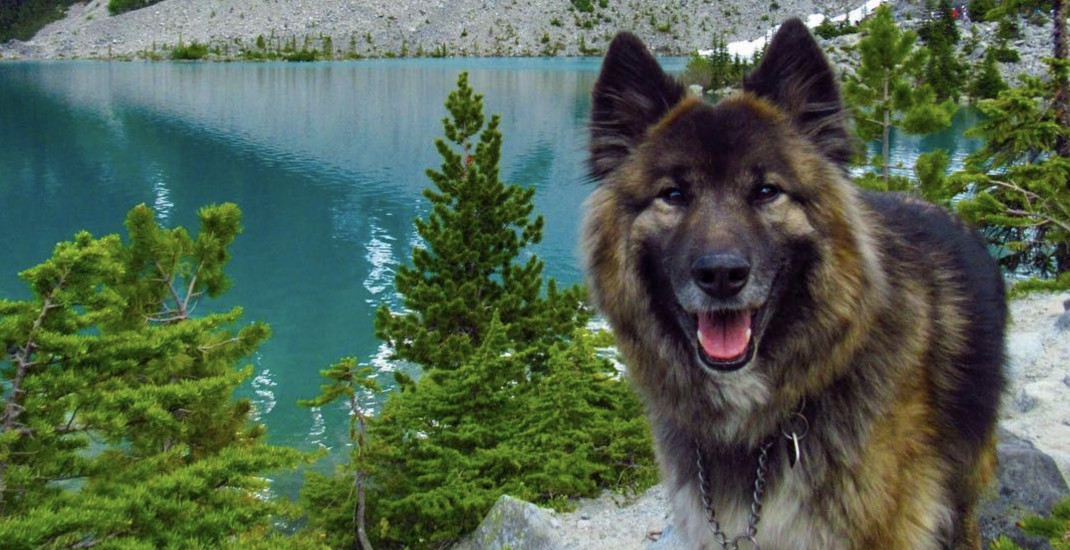 No dogs allowed: Joffre Lakes ban goes into effect this weekend
