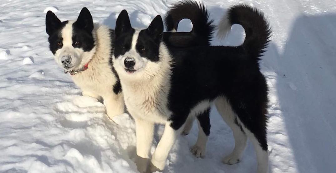 Dogs missing