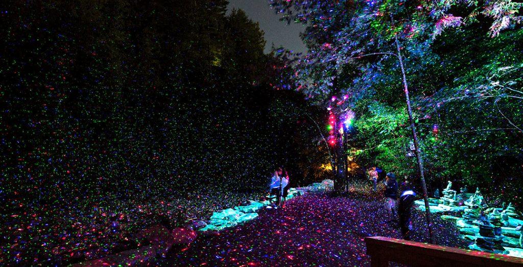 night walk july