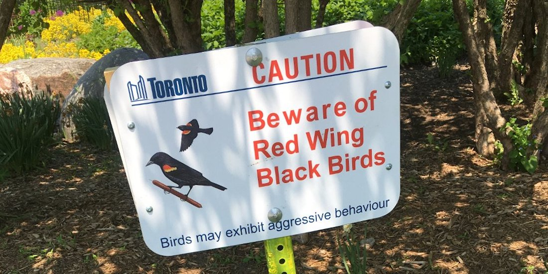 City puts up signs warning of red wing blackbirds in Toronto