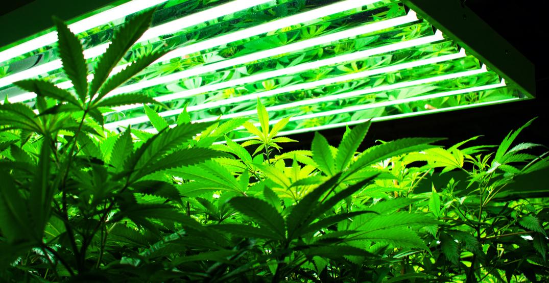 Legislation could stifle legal cannabis before it starts