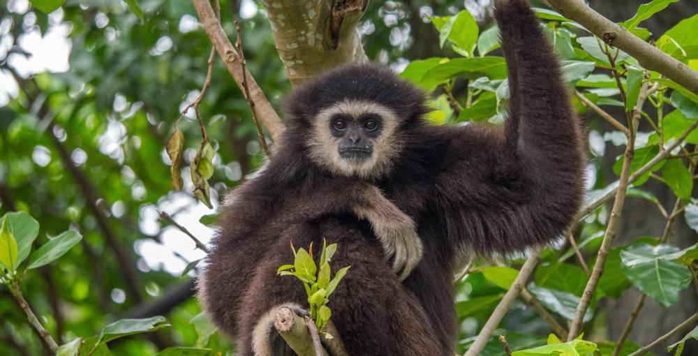 Ontario police seek help finding zoo's missing monkey and tortoise