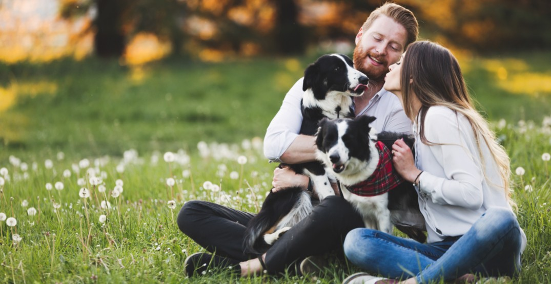 This doggy daycare in Calgary is hosting a speed dating night