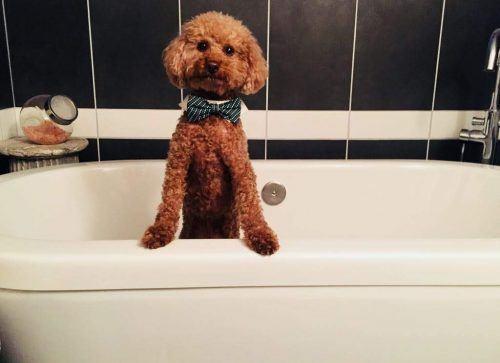 Teddy in the bath.