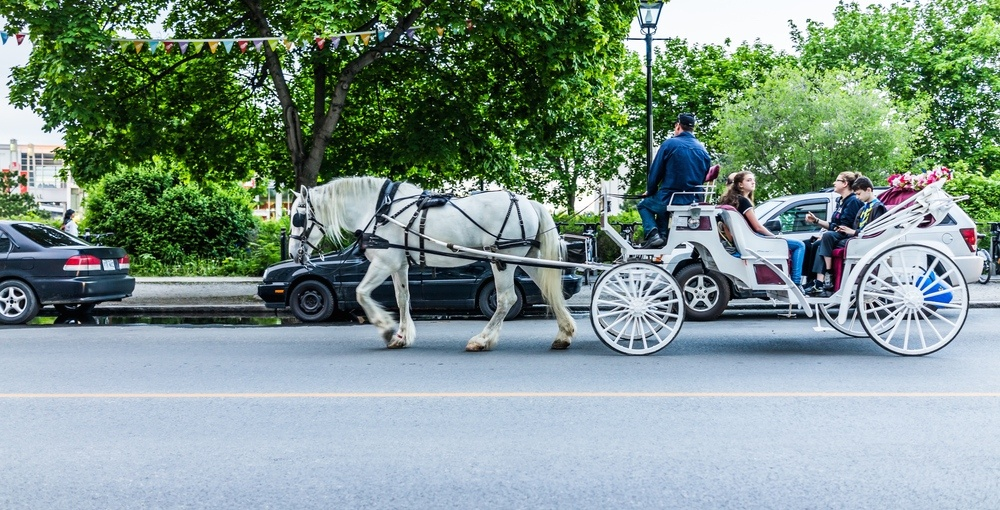 Montreal to ban horse-drawn carriages by 2020