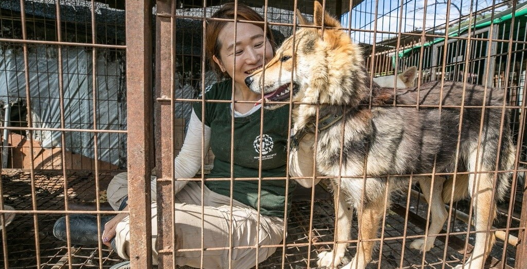 50 dogs rescued from South Korean meat farm recovering in Montreal