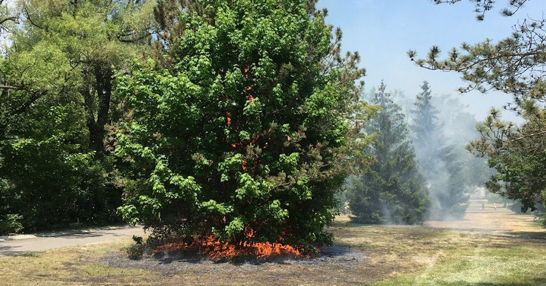 A grass fire broke out at Hanlan's Point over the weekend