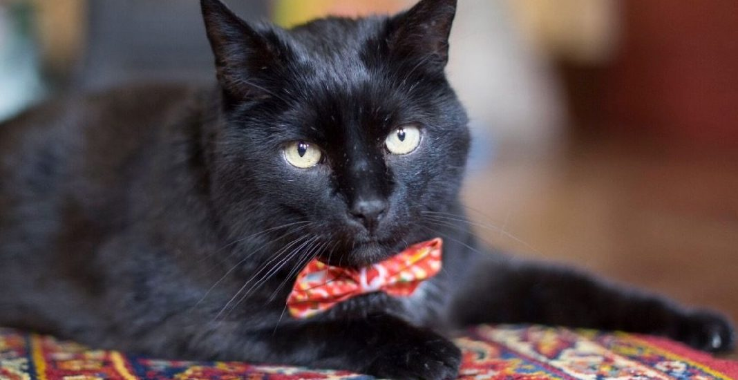 Adopt me: 15 great adoptable cats