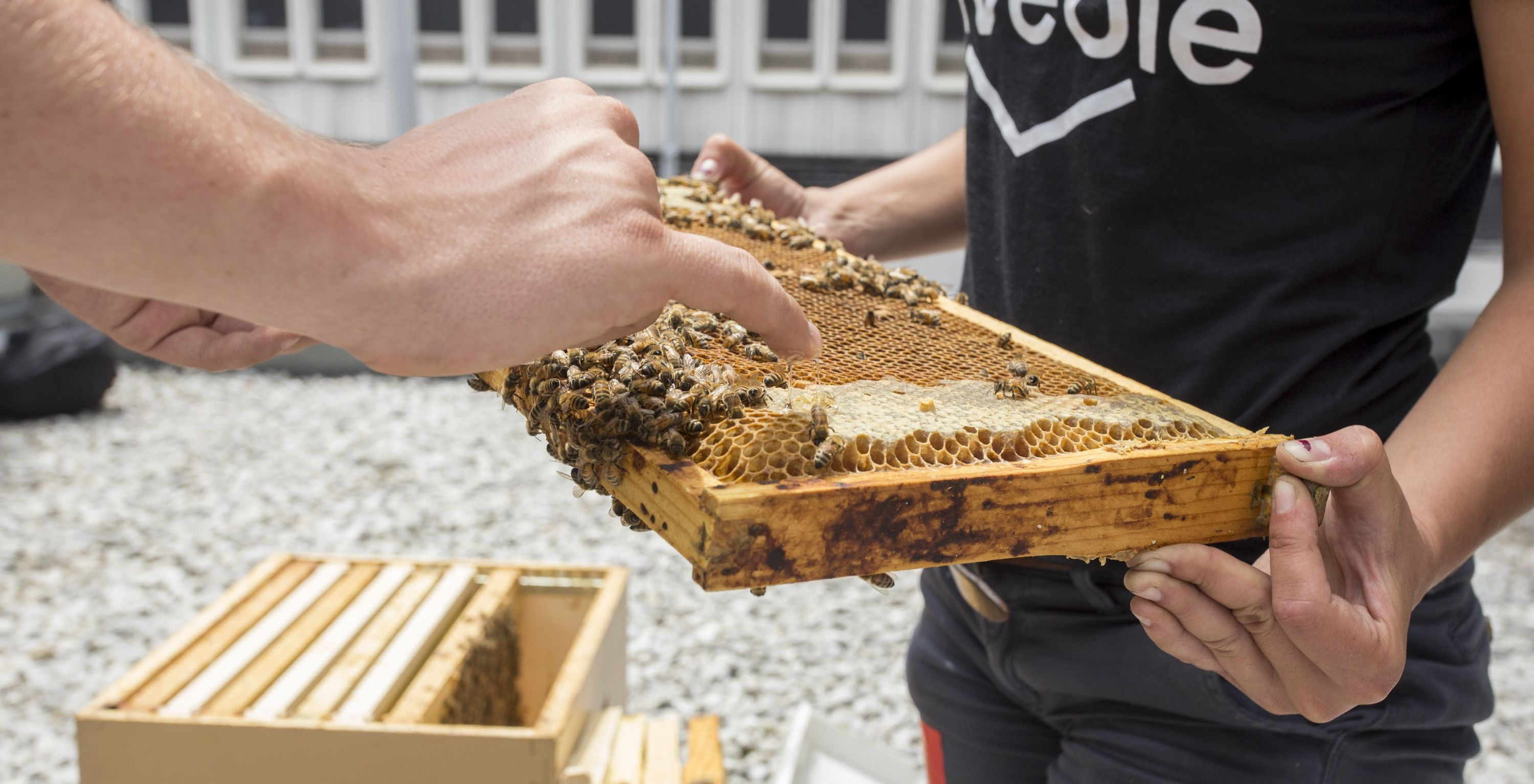 The Montreal Museum of Fine Arts welcomes two rooftop beehives
