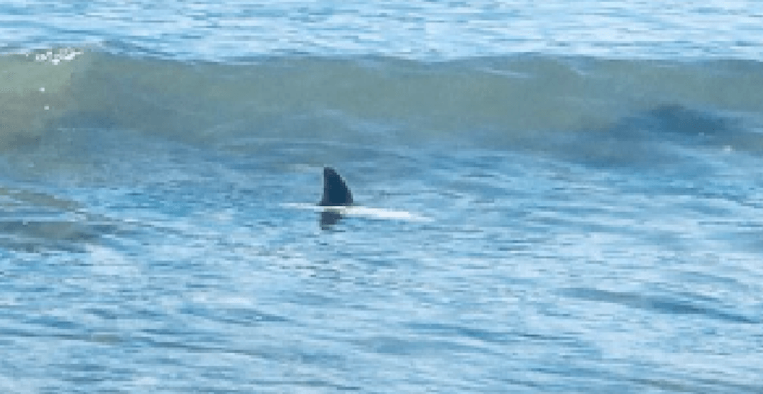 Shark spotted in the water close to Kits Beach (PHOTO)