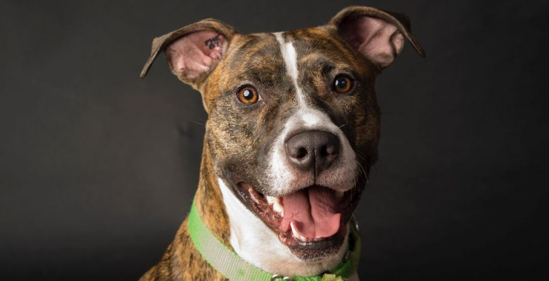 Adopt Me: 25 great dogs that need a home