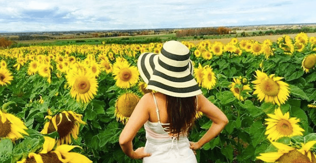Put this stunning sunflower maze on your summer 2018 must-do list