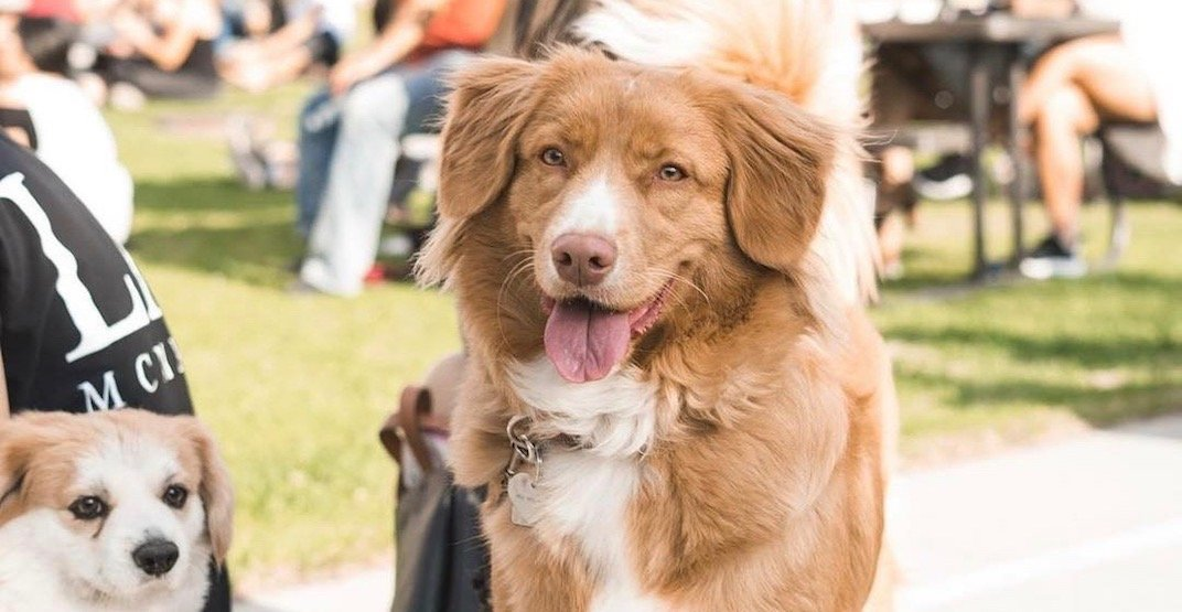 This new food truck festival in Calgary is made for dog lovers