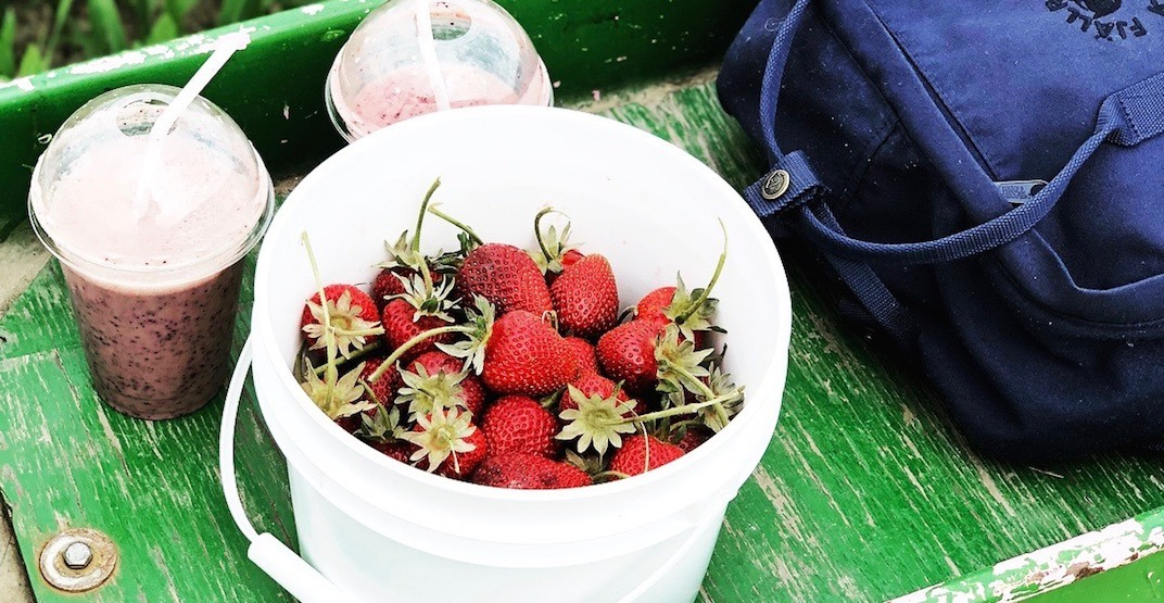The best places to go berry picking in the Lower Mainland