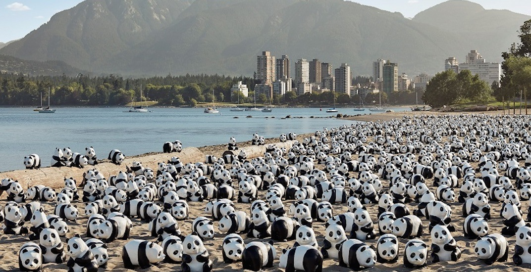A massive art display of 888 pandas is coming to Vancouver this summer