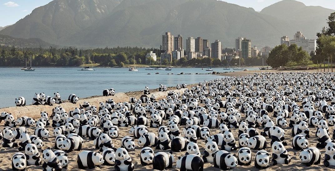 Vancouver panda exhibition 1