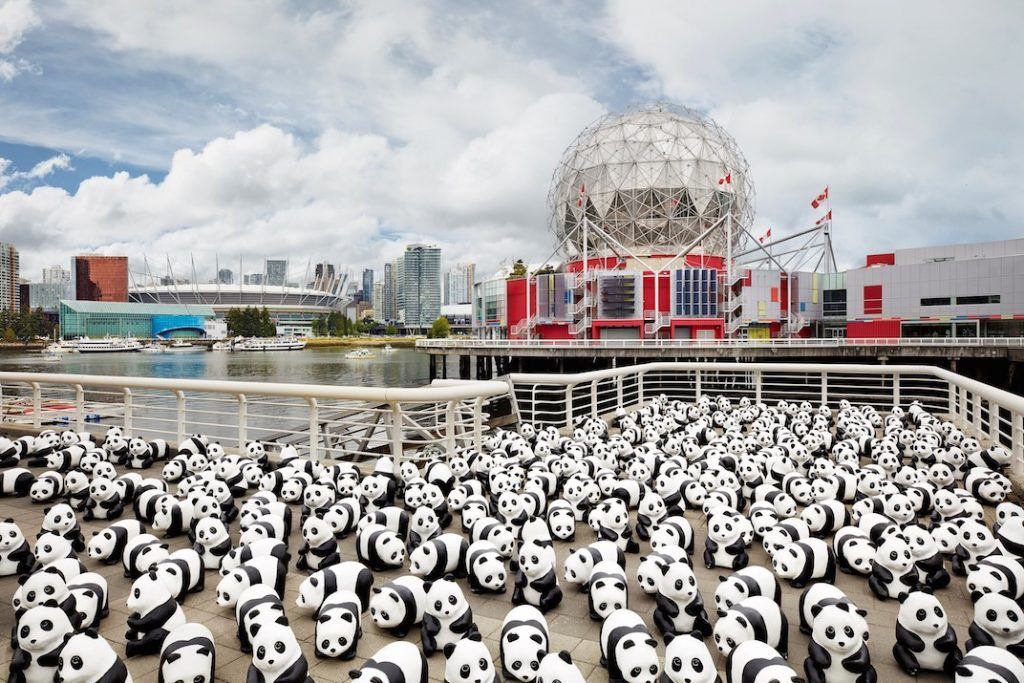 Panda exhibition Vancouver