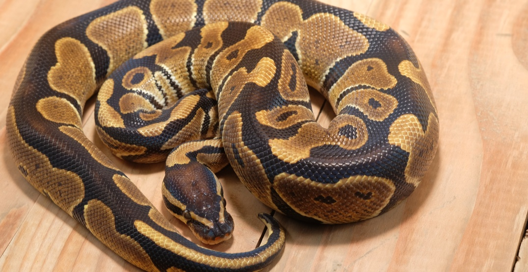 Fraser Valley's 'The Reptile Guy' charged for animal cruelty