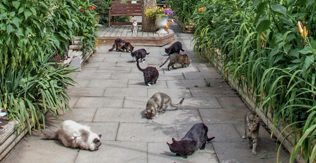 You can visit 400 felines at Canada's only cat sanctuary in Vancouver (PHOTOS)