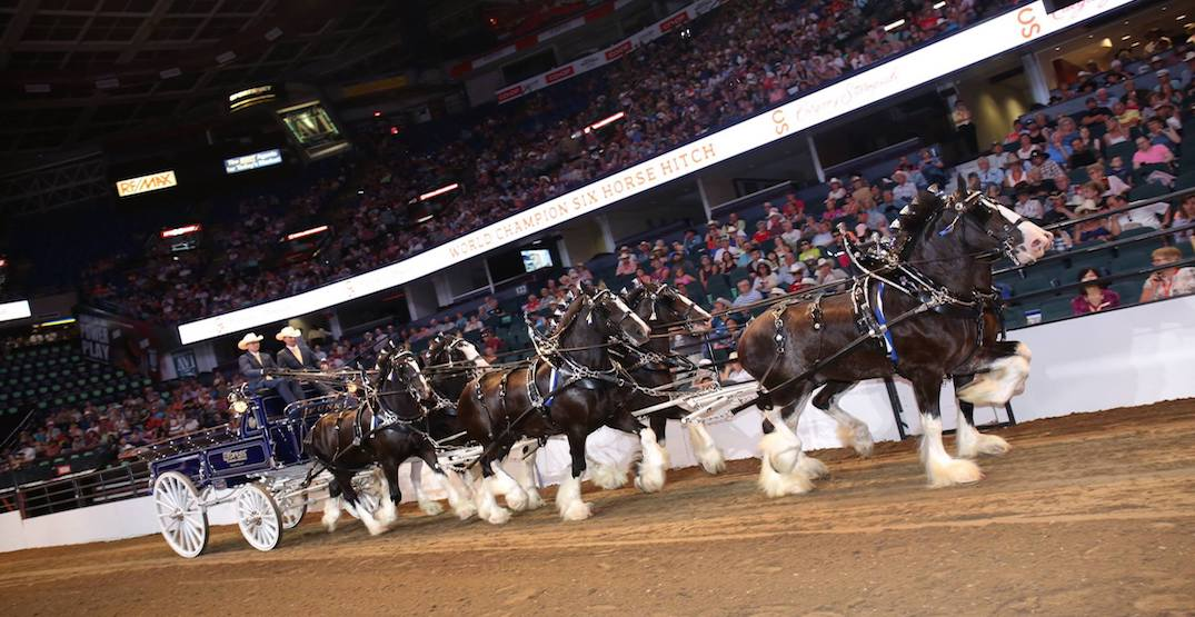 5 things to do at the Calgary Stampede today: Friday, July 6