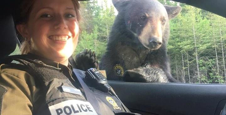 Quebec police officers snag selfie with wild bear (VIDEO)