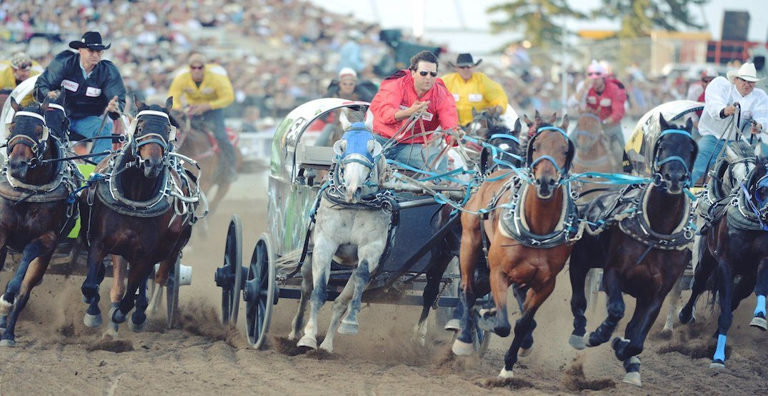 Opinion: GM Canada should stop sponsoring the Calgary Stampede chuckwagon race