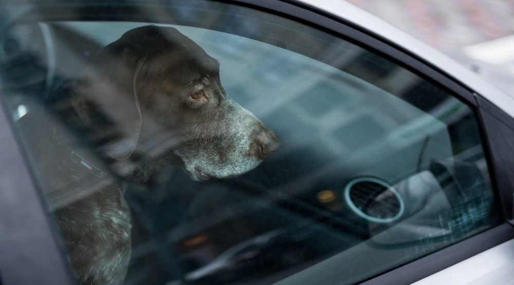North Vancouver RCMP respond to complaint about dog left in hot vehicle