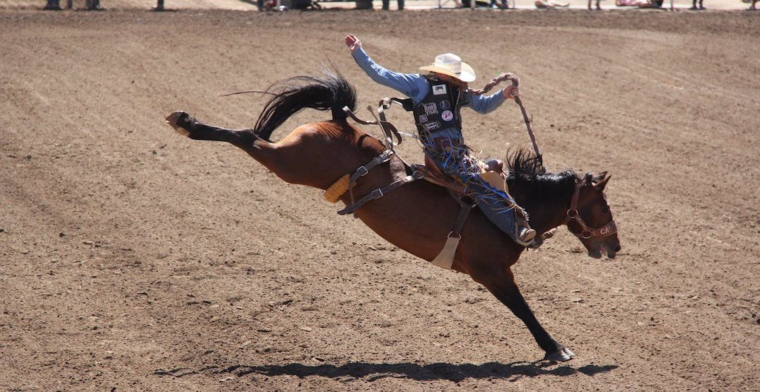 5 things to do at the Stampede today: Saturday, July 6