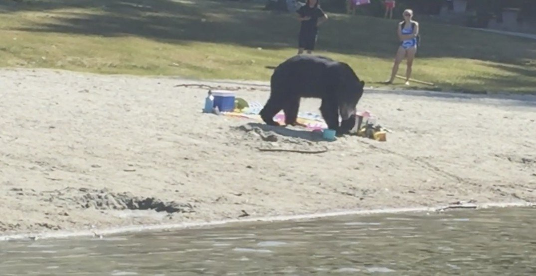 White Pine Beach reopens, officials warn hungry bear could still be in area