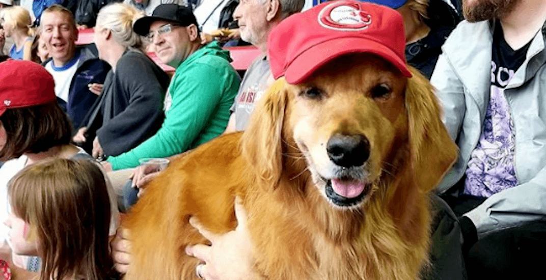 Dog vancouver canadians