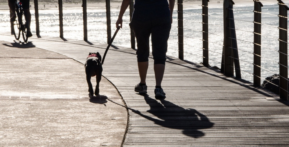 West Island town bans dogs from popular boardwalk